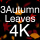 3 Autumn Leaves 4K Pack - VideoHive Item for Sale