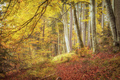 beautiful forest in autumn - PhotoDune Item for Sale