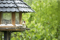 bird at the feeder - PhotoDune Item for Sale