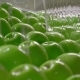 Industrial Farming, Processing and Storage of Apples - VideoHive Item for Sale