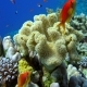 Colorful Fish on Vibrant Coral Reef, Red Sea - VideoHive Item for Sale
