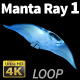 Manta Ray 1 - VideoHive Item for Sale
