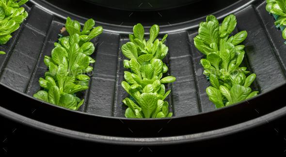 Vertical farm - Stock Photo - Images