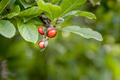 garden magnolia plant branch detail with red fruits - PhotoDune Item for Sale