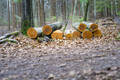 cutted wood in the forest - PhotoDune Item for Sale