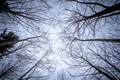 some leafless trees in the sky - PhotoDune Item for Sale