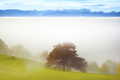 landscape covered in fog with the alps in the background - PhotoDune Item for Sale