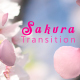 Sakura Cherry Blossom Transition - VideoHive Item for Sale