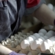 Female Hands Sorting Eggs in the Factory - VideoHive Item for Sale