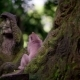 Sacred Monkey Forest - VideoHive Item for Sale