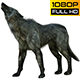 Wolf 6 Realistic Pack 3 - VideoHive Item for Sale