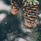 Christmas Snow on a Pinecone Tree Branch - VideoHive Item for Sale