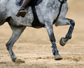 Close up image of legs of horse on show jumping competition. - PhotoDune Item for Sale