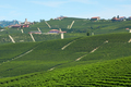 Green vineyards and small buildings in a sunny day in Italy - PhotoDune Item for Sale