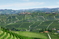 Green countryside with vineyards and Serralunga d'Alba town in Italy - PhotoDune Item for Sale