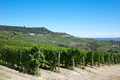 Green vineyards and Langhe hills in Italy, blue sky - PhotoDune Item for Sale