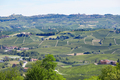 Green countryside, Langhe hills in Piedmont, Italy - PhotoDune Item for Sale
