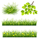 Vector Collection Grass and Leaves