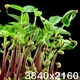 Mung Beans Germination on Black Background - VideoHive Item for Sale