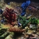 Fish in a Coral Reef - VideoHive Item for Sale
