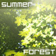 Green Leaves in Summer Forest - VideoHive Item for Sale
