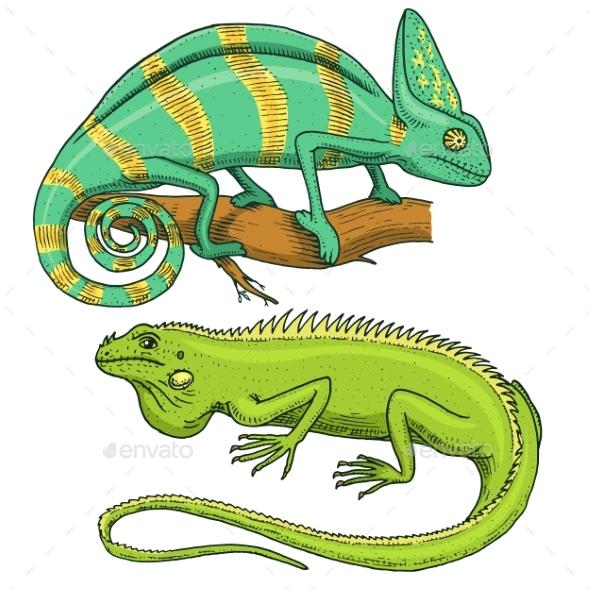 Chameleon Lizard, American Green Iguana, Reptiles - Animals Characters