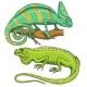 Chameleon Lizard, American Green Iguana, Reptiles