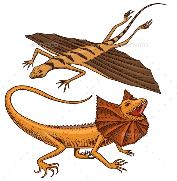 Frilled-necked Lizard, Flying Dragon or Agama - Animals Characters
