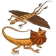 Frilled-necked Lizard, Flying Dragon or Agama