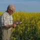 Old Farmer in the Field To Check the Quality and Ripening of the Crop - VideoHive Item for Sale