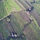 Flying up over Floating Gardens on Inle Lake - VideoHive Item for Sale