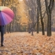 Young Beautiful Girl Going Alone Under Umbrella in Autumn Park - VideoHive Item for Sale