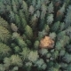 Flying Over Treetops. Aerial Shot of Firs and Yellow Birches in Fall Forest - VideoHive Item for Sale