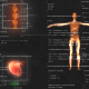 Female Anatomy Medical HUD Animation - VideoHive Item for Sale