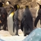Pinguins in the Zoo - VideoHive Item for Sale