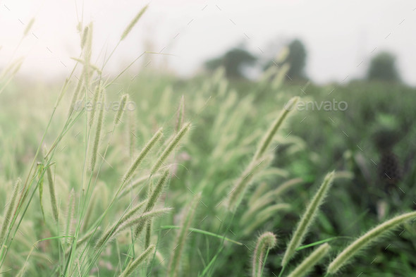Grass of nature - Stock Photo - Images
