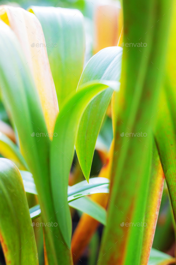 leaves plant with sunlight - Stock Photo - Images