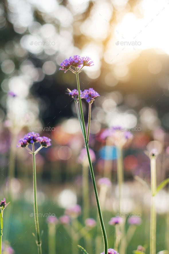 Purple flowers in the forest - Stock Photo - Images
