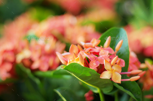 Red flowers with colorful - Stock Photo - Images