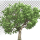 Growing Tree - VideoHive Item for Sale