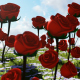 Red Roses at Daylight - VideoHive Item for Sale
