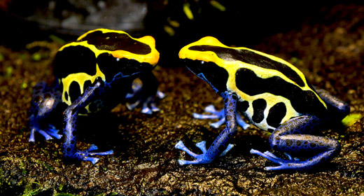 Exotic Frogs