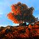 Autumn Tree And Fallen Leaves - VideoHive Item for Sale
