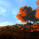 Autumn Trees In The Clearing - VideoHive Item for Sale