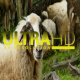 Sheep 10 - VideoHive Item for Sale
