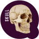 Human skull - VideoHive Item for Sale