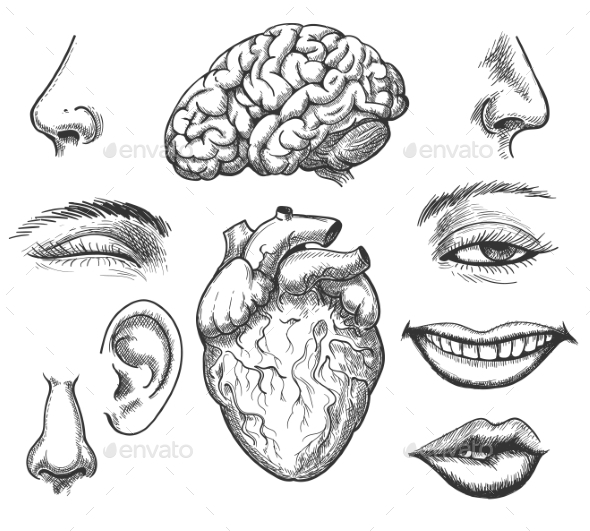 Human Face and Organs - Miscellaneous Vectors