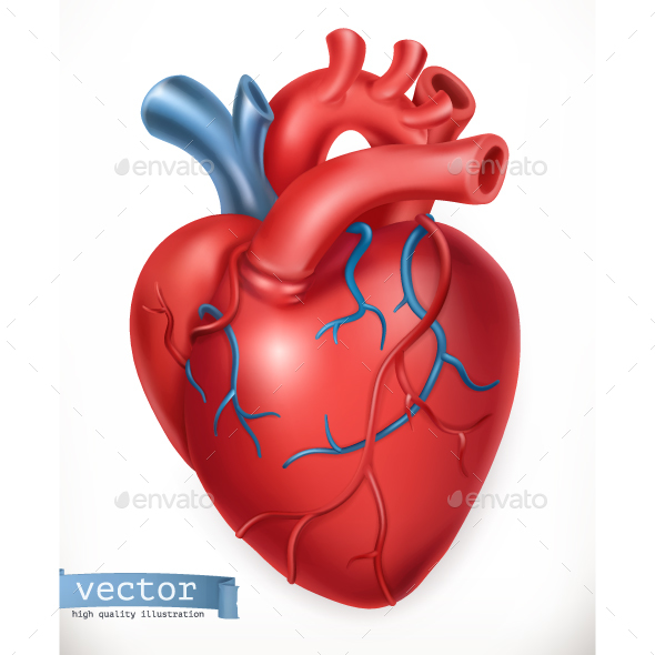 Human Heart by Allevinatis | GraphicRiver