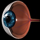 Eye Anatomy - VideoHive Item for Sale