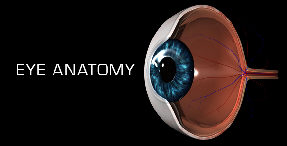 Eye Anatomy by madi7779 | VideoHive